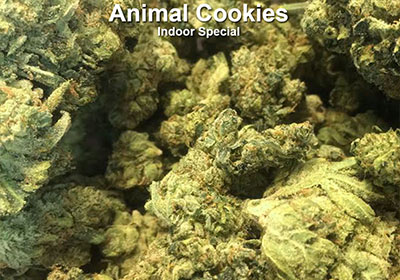 Animal Cookies indoor indica midshelf on sale