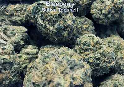 Blueberry Sativa Topshelf Flower