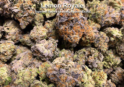 Lemon Royale Hybrid leaning Sativa