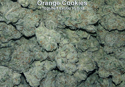 Orange Cookies Hybrid Exotic topshelf