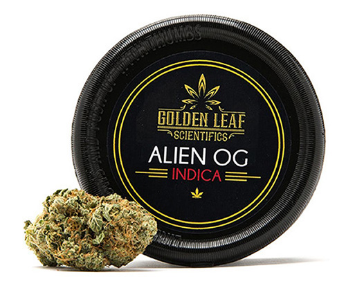 Golden Leaf Scientfics Alien OG